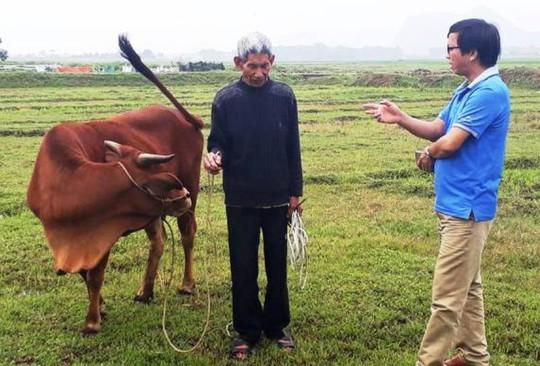 Trâu, bò ra đồng gặm cỏ phải đóng phí 100.000 đồng/con - Ảnh 1.