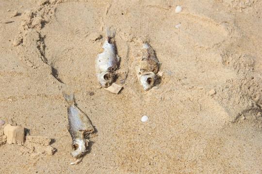 Cá chết dạt vào bờ biển Quảng Trị là do khai thác nổ mìn - Ảnh 2.