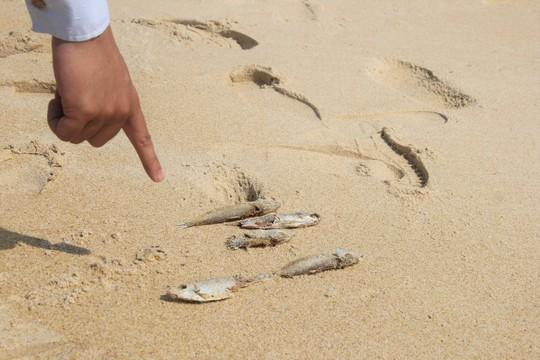Cá chết dạt vào bờ biển Quảng Trị là do khai thác nổ mìn - Ảnh 4.