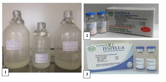 Việt Nam sản xuất vắc-xin ngừa cúm mùa 3 trong 1 rẻ 1/3 giá nhập - Ảnh 2.