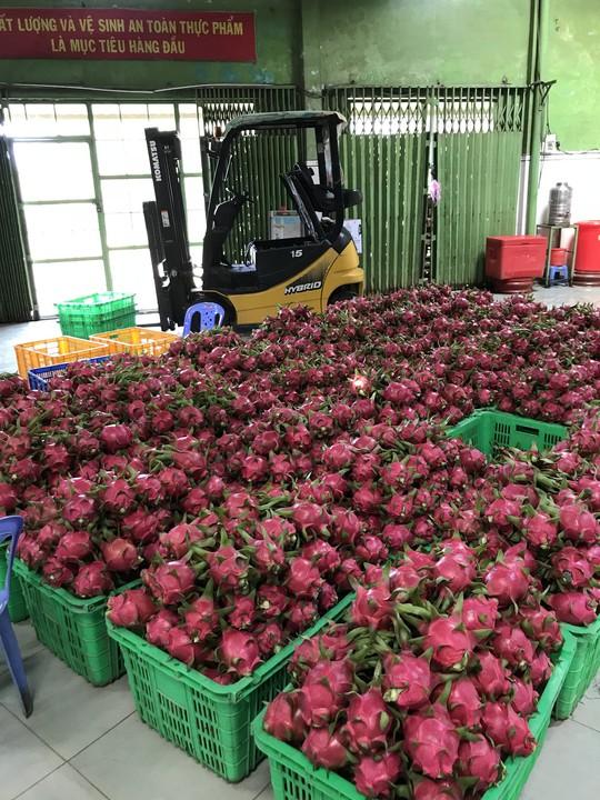 Khoai lang Việt Nam có cơ hội xuất khẩu số lượng lớn sang Thái - Ảnh 1.