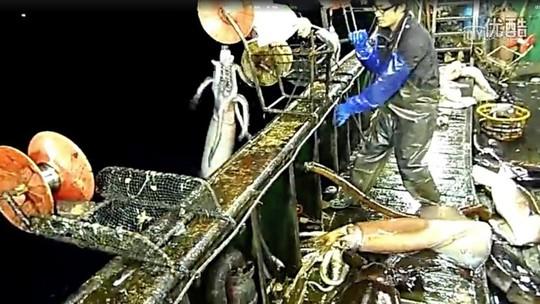 Ý đồ của Trung Quốc sau chương trình đánh bắt mực ống - Ảnh 1.