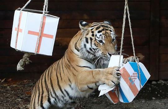 Soi kèo mới nhất trận bán kết Anh - Croatia - Ảnh 3.