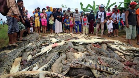 Đám đông tàn sát gần 300 con cá sấu báo thù 1 mạng người - Ảnh 1.