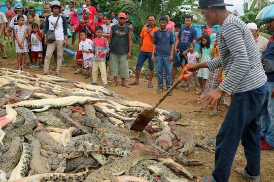 Đám đông tàn sát gần 300 con cá sấu báo thù 1 mạng người - Ảnh 2.