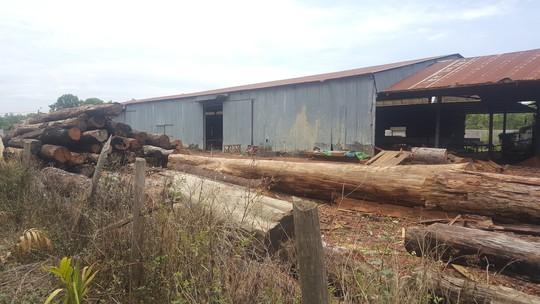 Đội trưởng kiểm lâm nhận hàng trăm triệu của trùm gỗ lậu Phượng râu - Ảnh 2.