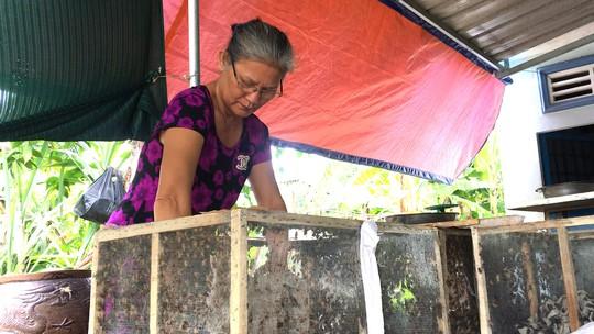 Cô giáo về hưu mỗi tháng cung cấp 500 kg dế ra thị trường - Ảnh 2.