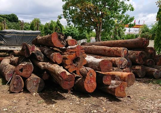 Đội trưởng kiểm lâm nhận hàng trăm triệu của trùm gỗ lậu Phượng râu - Ảnh 1.