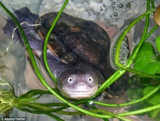 Bác sĩ tá hỏa phát hiện rùa chết trong... chỗ kín của cô gái - Ảnh 1.