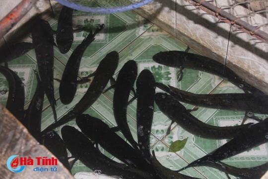 """Cá lóc nướng Lộc Yên """"mê hoặc"""" thực khách khó tính - ảnh 1"""
