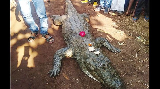 Cá sấu 130 tuổi chết, cả làng bỏ ăn, khóc ròng - Ảnh 1.