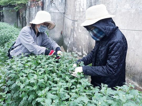 Chùm ảnh: Ngắm làng hoa Vân Dương vào mùa vụ Tết - Ảnh 10.