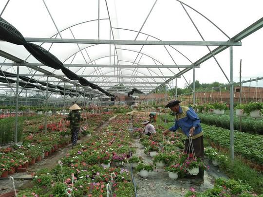 Chùm ảnh: Ngắm làng hoa Vân Dương vào mùa vụ Tết - Ảnh 5.