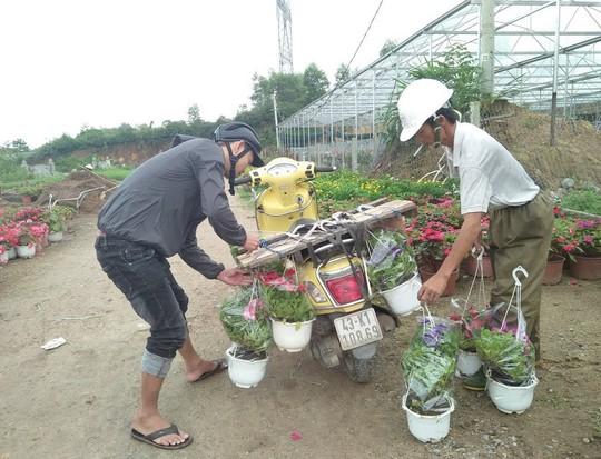 Chùm ảnh: Ngắm làng hoa Vân Dương vào mùa vụ Tết - Ảnh 7.