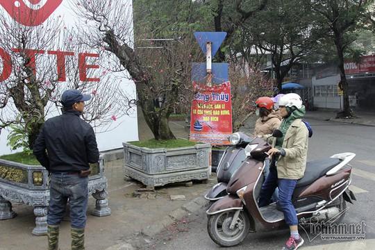 Bất ngờ với cây đào ven đường, gốc mục ruỗng có giá đến 120 triệu đồng - Ảnh 10.