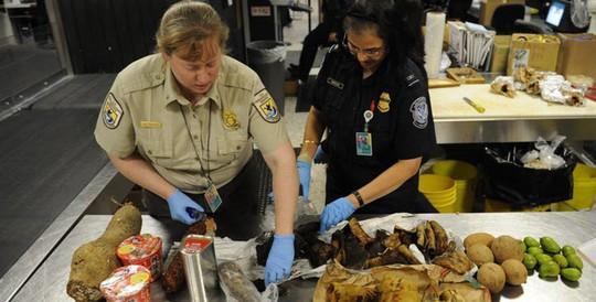 (m5, 9-2) 24 vật phẩm lạ đời bị tịch thu ở biên giới Mỹ và Canada - Ảnh 23.