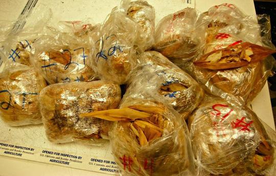 (m5, 9-2) 24 vật phẩm lạ đời bị tịch thu ở biên giới Mỹ và Canada - Ảnh 1.