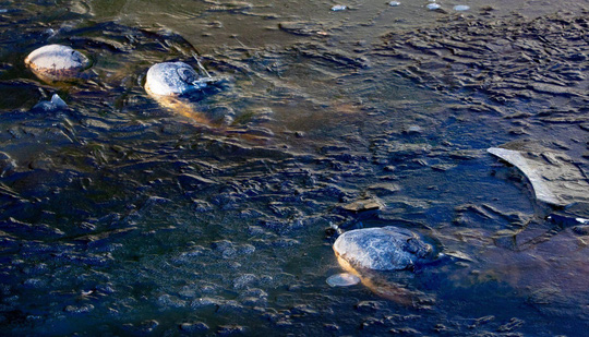 Mỹ: Đàn cá sấu bị đóng băng, vẫn kịp chĩa mũi lên trời - Ảnh 1.