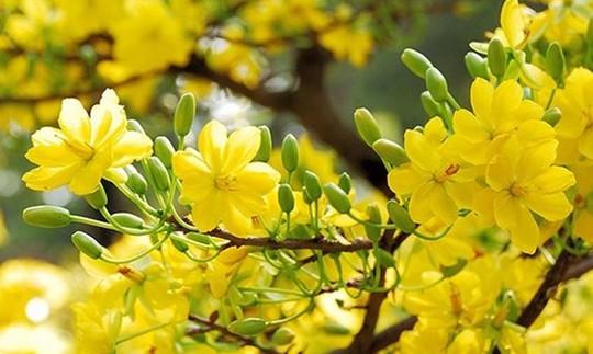 Mùa Xuân - mùa của yêu thương - Ảnh 1.