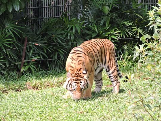 Clip: Những khoảnh khắc cưng muốn xỉu ở  vườn thú Safari Phú Quốc - Ảnh 8.