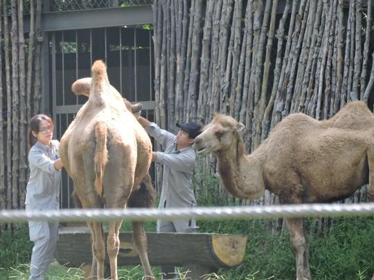 Clip: Những khoảnh khắc cưng muốn xỉu ở  vườn thú Safari Phú Quốc - Ảnh 12.