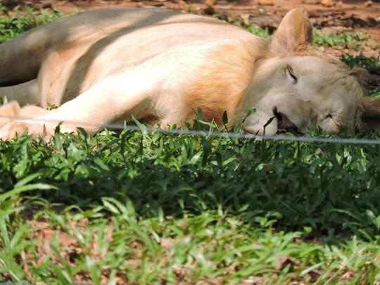 Clip: Những khoảnh khắc cưng muốn xỉu ở  vườn thú Safari Phú Quốc - Ảnh 6.