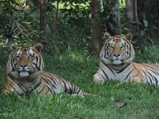 Clip: Những khoảnh khắc cưng muốn xỉu ở  vườn thú Safari Phú Quốc - Ảnh 9.