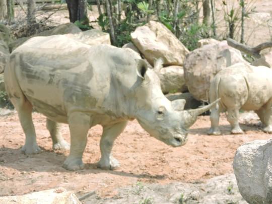 Clip: Những khoảnh khắc cưng muốn xỉu ở  vườn thú Safari Phú Quốc - Ảnh 31.