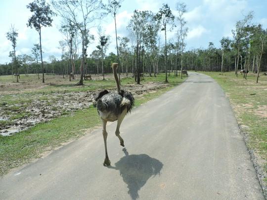 Clip: Những khoảnh khắc cưng muốn xỉu ở  vườn thú Safari Phú Quốc - Ảnh 33.