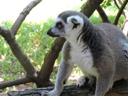Clip: Những khoảnh khắc cưng muốn xỉu ở  vườn thú Safari Phú Quốc - Ảnh 21.