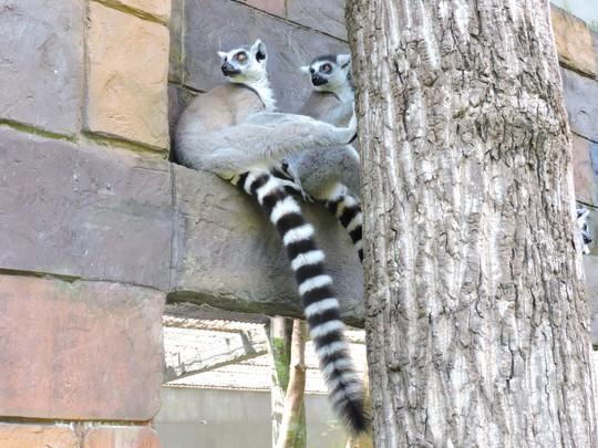 Clip: Những khoảnh khắc cưng muốn xỉu ở  vườn thú Safari Phú Quốc - Ảnh 19.
