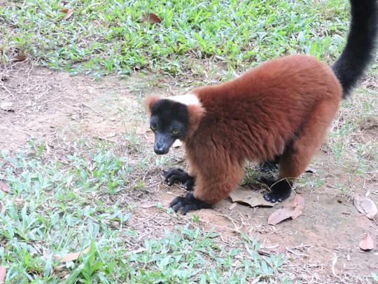 Clip: Những khoảnh khắc cưng muốn xỉu ở  vườn thú Safari Phú Quốc - Ảnh 17.