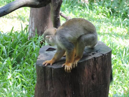 Clip: Những khoảnh khắc cưng muốn xỉu ở  vườn thú Safari Phú Quốc - Ảnh 14.
