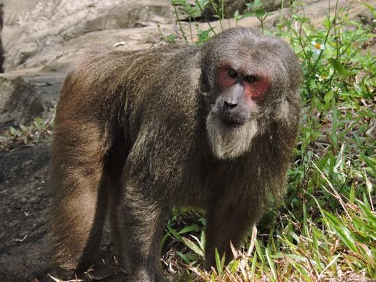 Clip: Những khoảnh khắc cưng muốn xỉu ở  vườn thú Safari Phú Quốc - Ảnh 25.