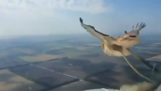 Chim tan xác sau khi lao vào kính chắn gió máy bay - Ảnh 1.