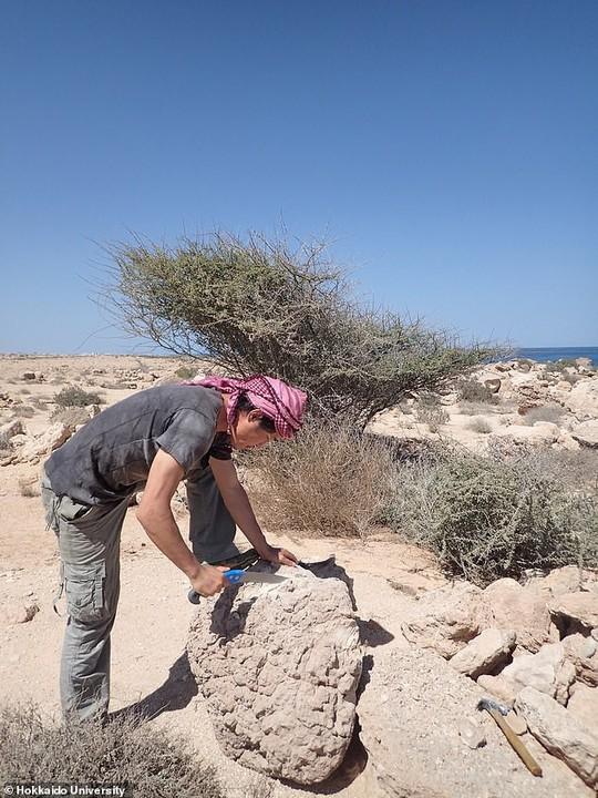 San hô đá tiết lộ sự biến mất bí ẩn của đế chế 4.200 năm tuổi - Ảnh 4.
