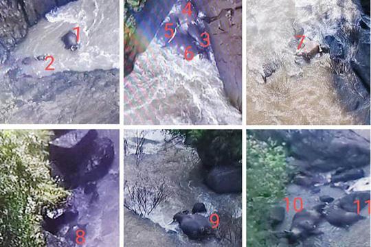 Thái Lan: Thêm hàng loạt voi chết dưới thác nước - Ảnh 2.