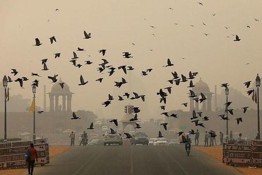 Báo động ô nhiễm không khí ở New Delhi - Ảnh 1.
