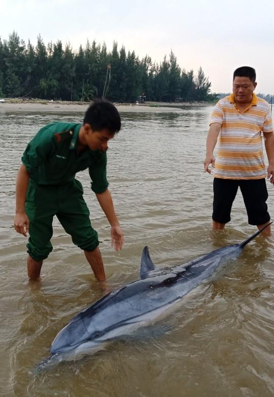 Sau đàn cá heo 100 con xuất hiện, 1 chú cá heo lại dạt vào biển Cửa Đại - Ảnh 2.