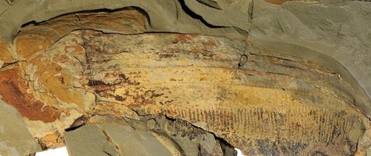 Điếng hồn trước con tôm khủng dài 1,8 m  - Ảnh 2.
