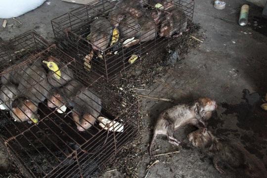 Vụ thú rừng chết dần trong kho hải quan: Hé lộ lý do kiểm lâm không tiếp nhận vụ việc - Ảnh 3.