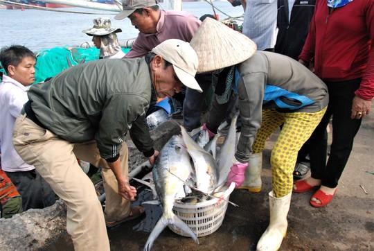 Đầu năm ra biển, ngư dân Quảng Trị trúng đàn cá bè gần 140 tấn - Ảnh 1.