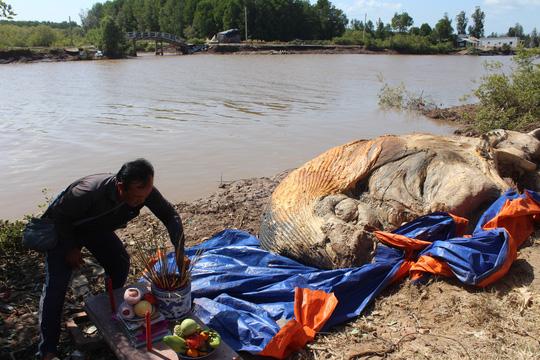 Dân kéo đến xem xác cá voi khủng trôi vào bờ, đang phân hủy nặng - Ảnh 5.
