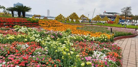 Cầu Vàng rực rỡ tại đường hoa Đà Nẵng - Ảnh 11.