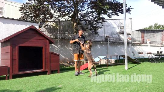 Độc đáo khu phức hợp tiện nghi có massage dành cho chó cưng - Ảnh 11.