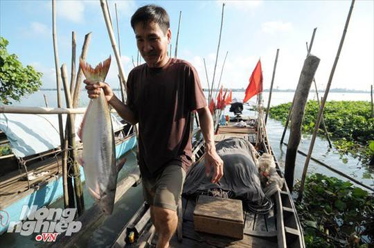 Sướng mắt theo ghe miền Tây săn tôm càng, cá bông lau - Ảnh 18.