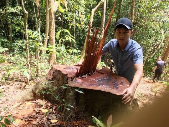 Cận cảnh khu rừng gỗ quý ở Quảng Bình bị lâm tặc chặt phá tan hoang - Ảnh 2.