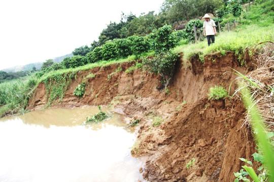 Chấm dứt khai thác cát trên sông Đồng Nai của 3 doanh nghiệp - Ảnh 1.