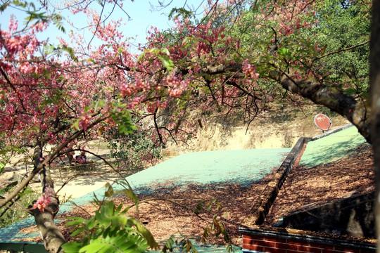 Hoa ô môi nhuộm hồng Cát Tiên đẹp đến nao lòng - Ảnh 9.