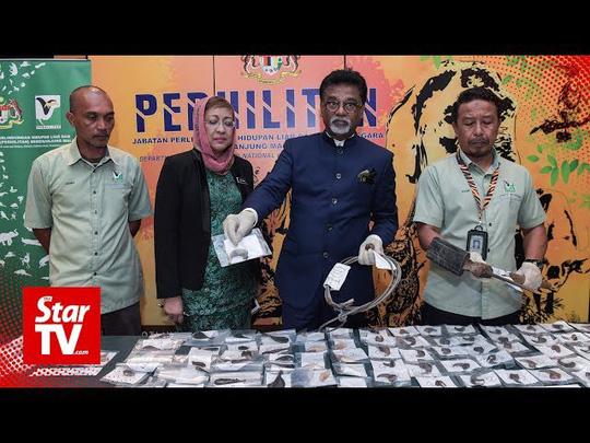 Malaysia bắt 2 người Việt nghi săn trộm hổ - Ảnh 2.